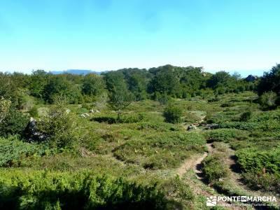 Hayedos Rioja Alavesa- Sierra Cantabria- Toloño;viajes puente de octubre el paseo el escorial parqu